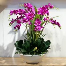 Bonsai, Blues, Flowers, Home & Living