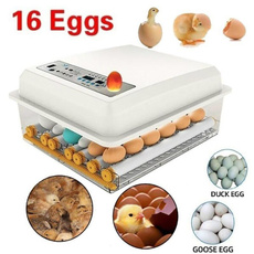 Mini, quailincubator, chickeneggincubator, minieggincubatorhatcherymachine
