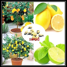 Bonsai, Plants, lemonseed, lemon