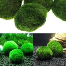 Plants, aquaticplant, Home & Living, aquariumplant