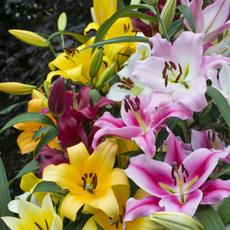 Plants, minjiangriver, perennial, potting
