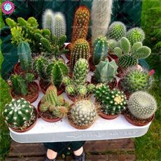 Bonsai, Plantas, Garden, Hogar y estilo de vida