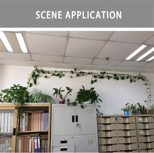 Plants, bottlewatertop, Hooks, Gardening Supplies