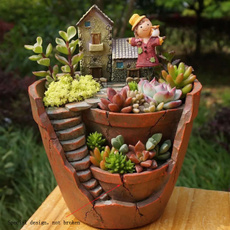 Bonsai, succulent, Plants, Flowers