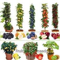 Bonsai, fruittreeseed, Plants, Garden