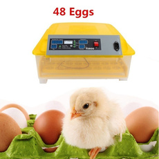 incubator, poultrysupplie, Home & Living, Eggs