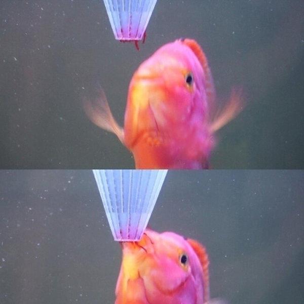 aquariums, fishaquarium, Cup, aquariumdecoration