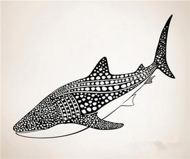 Shark, Stickers, decoration, vinyl