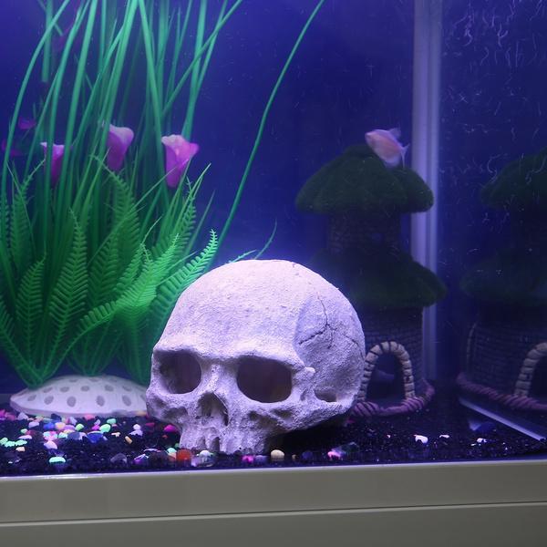 Exotic, Home Decor, skull, fish