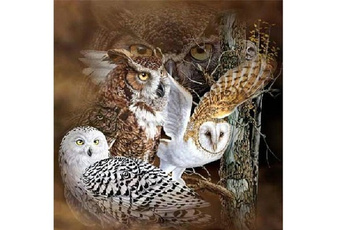 Owl, Decor, DIAMOND, Jewelry