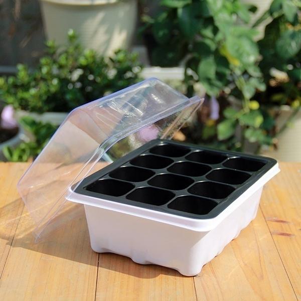 Bonsai, Mini, growbox, Gardening