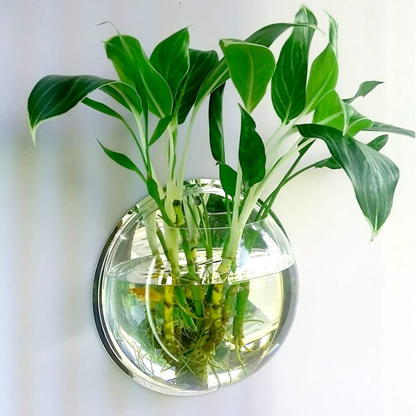 Plants, fish, Wall Mount, wallhangingvase