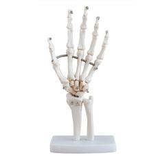 Art Supplies, righthand, Skeleton, skeletonmodel