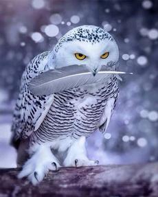 handmadecraftsdiy, wallpapergraphicsdecal, DIAMOND, Owl