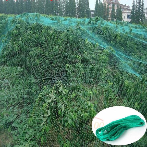 meshantibirdnet, plantprotection, Nylon, sparrow