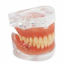 dentaltool, dentalcare, dentallabequipment, dentalteachmodel