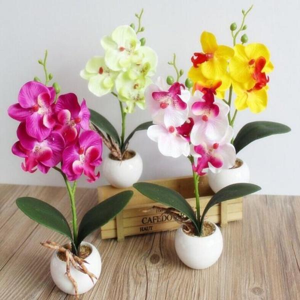 butterfly, Bonsai, Plants, Flowers