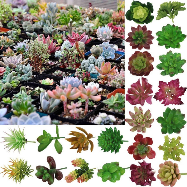 decoration, Plants, Flowers, Garden