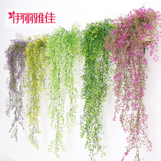 botany, Plants, hangingbasket, vine