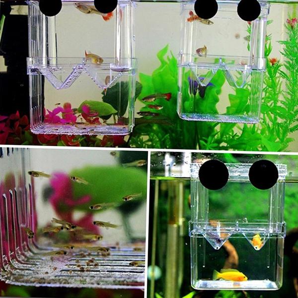 Box, Tank, isolation, fish