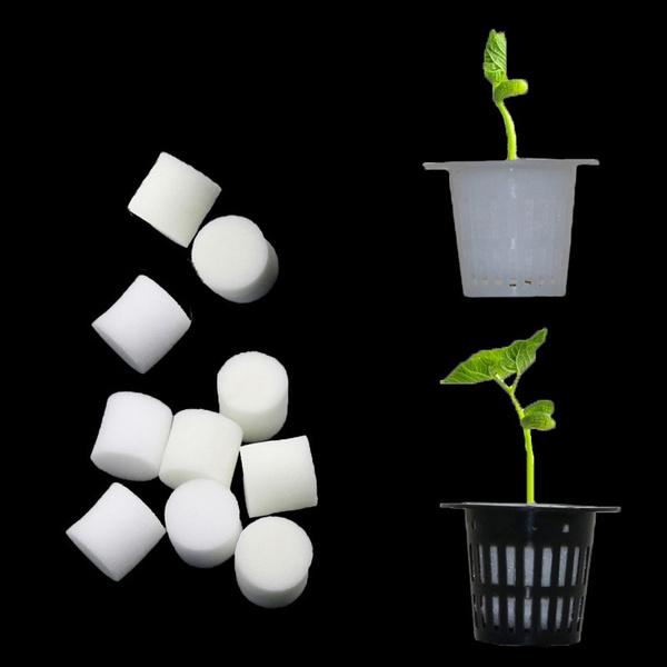 Flowers, hydroponic, soillesscultivation, Pot
