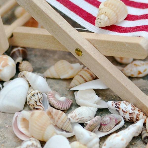 shells, Natural, Assorted, seashell