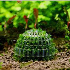 Funny, Plants, fishaquarium, Tank