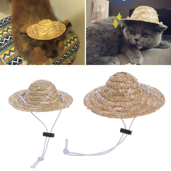 Cap, Hawaiian, Dogs, Pets