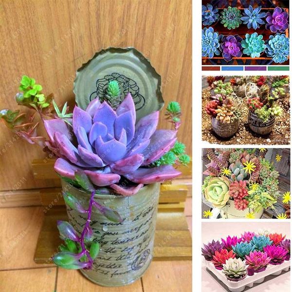 Bonsai, succulent, Plants, Fashion