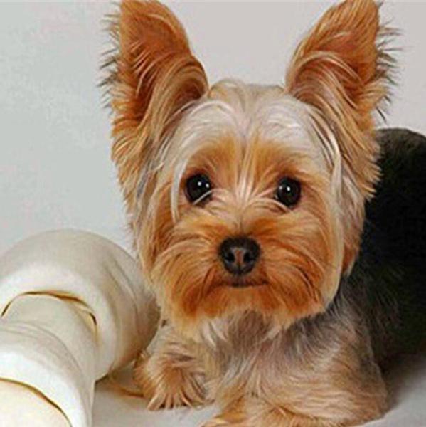 diamondmosaic, doganimal, homedecorative, Pets