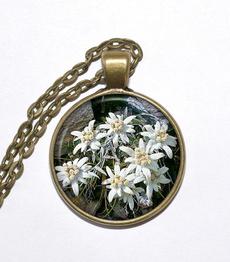 edelweis, Mountain, Flowers, art
