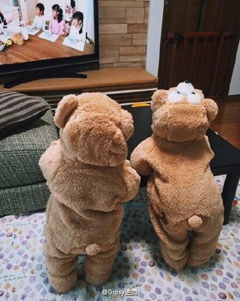 cute, hooded, Winter, Bears