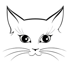 catface, lovely, Pets, Cars