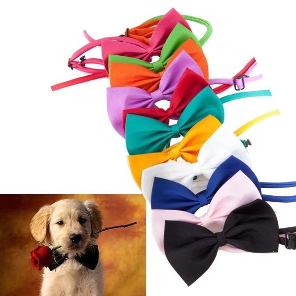 puppy, necklacecollar, Necktie, holidaybowtie