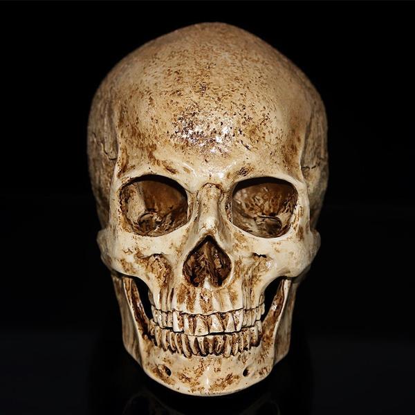 skullmodel, Decor, humanskullreplica, handicraft
