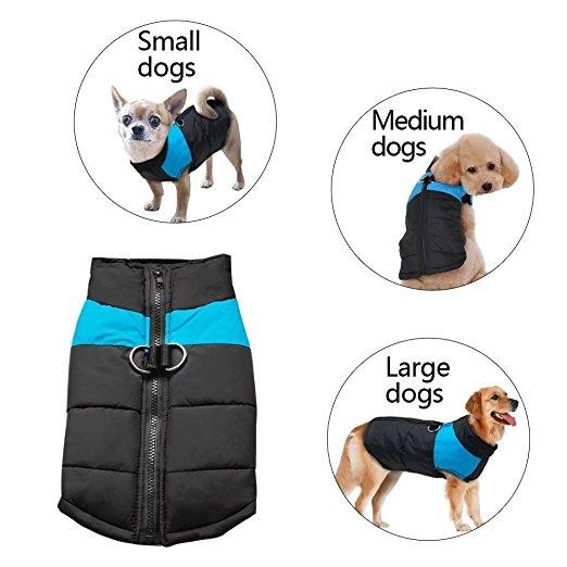 bigdog, chihuahua, dog coat, Pets