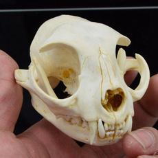 vet, Natural, Skeleton, skull
