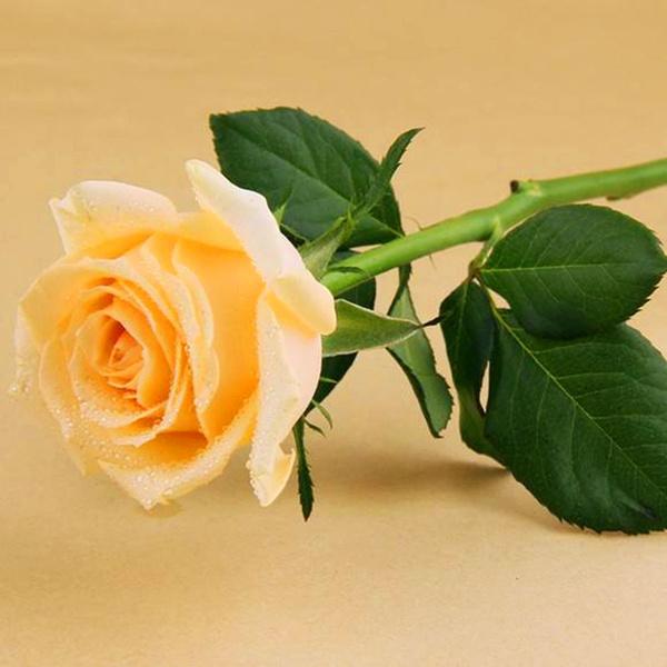 Life, Outdoor, Garden, Bouquet
