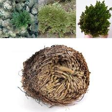 Bonsai, Plants, Fashion, Gardening