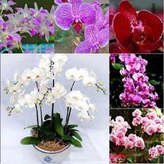 butterflyorchidseed, butterfly, Garden, moth