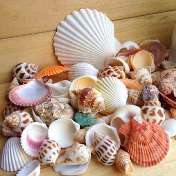 shells, Natural, starfish, conch