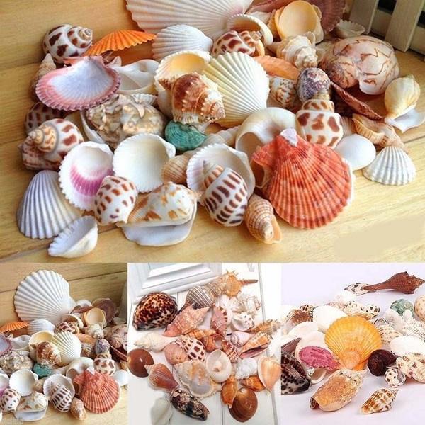 aquariumaccessorie, aquariumfishsupplie, shells, conch