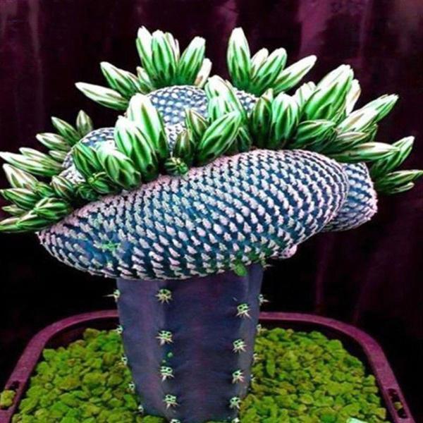 Bonsai, Decor, plantingtool, gardensupplie