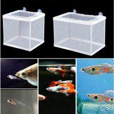 Box, Tank, Home & Living, fish