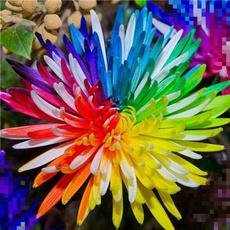 Bonsai, rainbow, Flowers, Garden