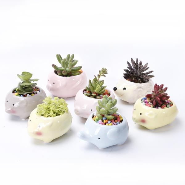 Plants, Flowers, Home & Living, succulentplanter