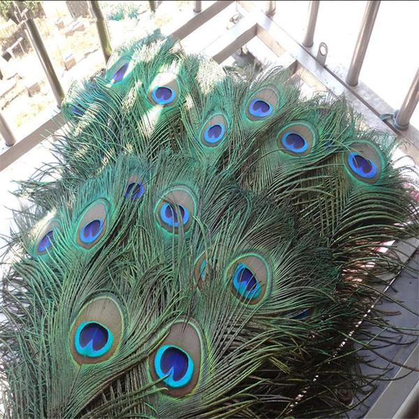 Beautiful, peacock, Fashion, Natural