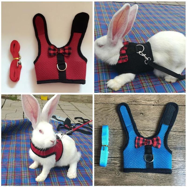Vest, withleash, Animal, Pets