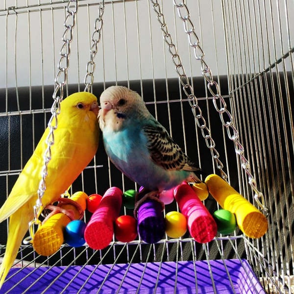 Toy, hammock, Colorful, Pets
