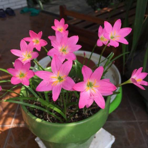 botany, Plants, Flowers, Gardening